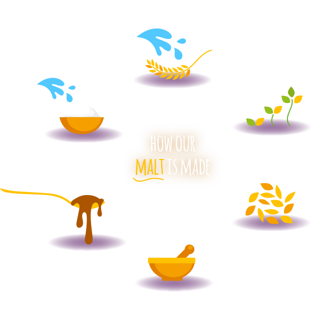 How our malt is made life cycle
